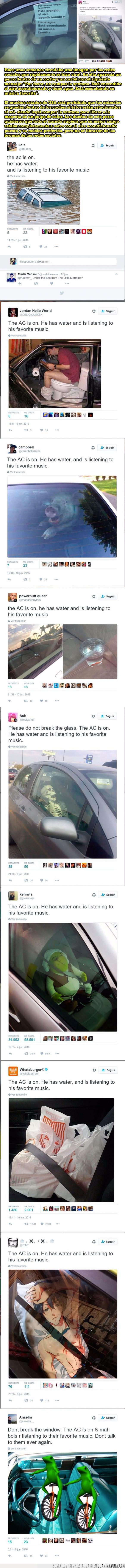 coche,dentro,perros