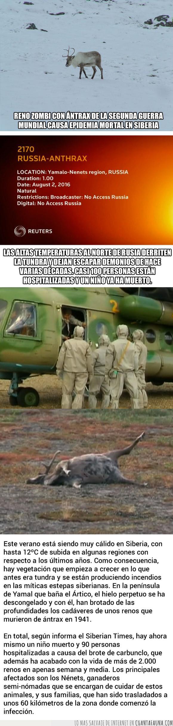 antrax,epidemia,reno,zombie