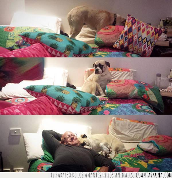 búsqueda,compañero,consentido,perro,siesta,susto