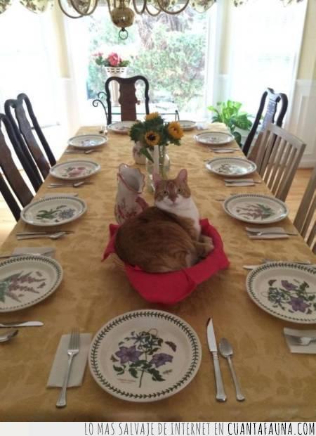 abuela,abusador,casa,cesta,comida,gato