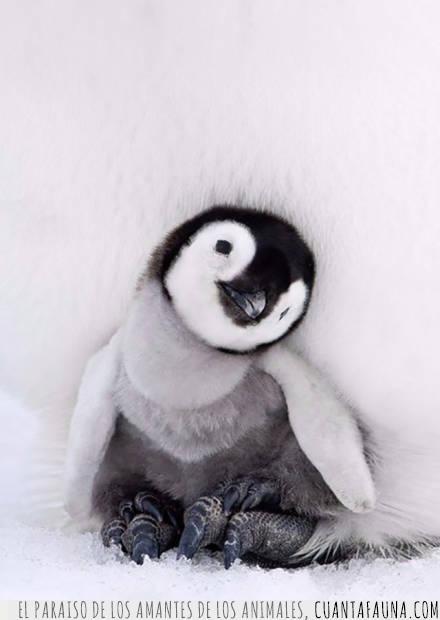 calor,confort,cría,frío,padres,pingüino
