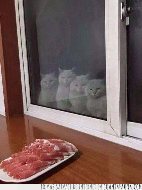 cristal,gatos,jamón,puerta,tentación,tortura,vidrio