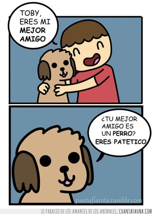 mejor amigo,perro,realidad