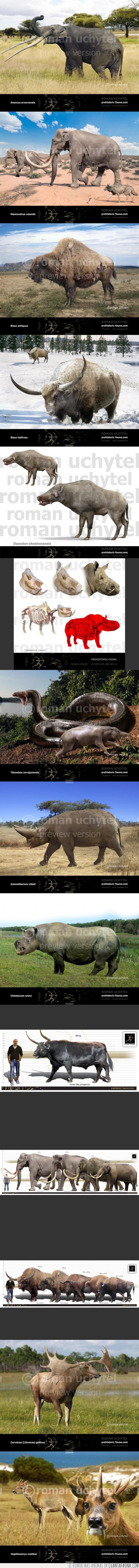 Animal,Ciervo,Elefante,Fauna,Prehistoria,Prehistorica,Primitiva,Toro,Vaca