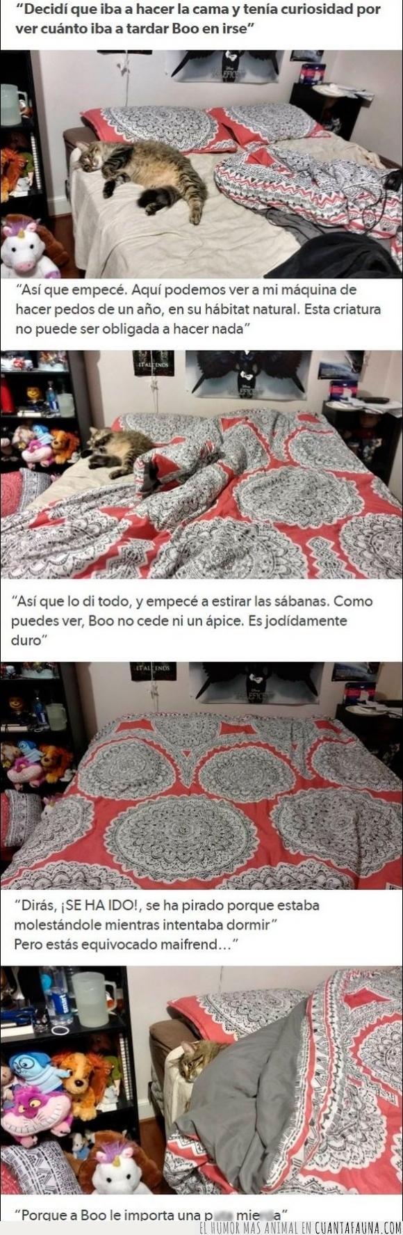 boo,cama,dormir,edredón,gato,vago