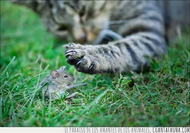 despertar,gato,pesadilla,ratón,sueño