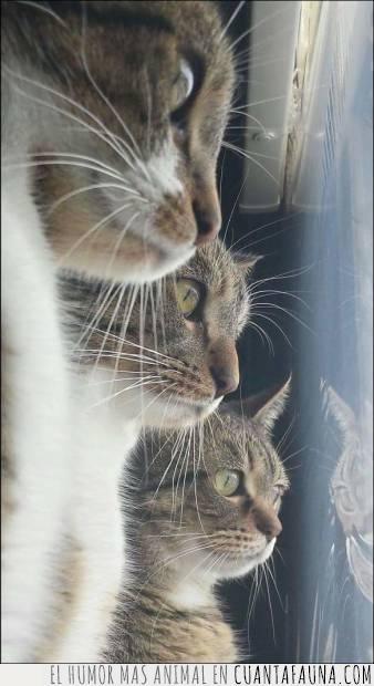 conjunto,gatos,mirar,trío,ventana