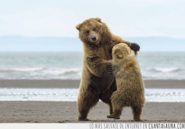 baile,danza,oso,pasos
