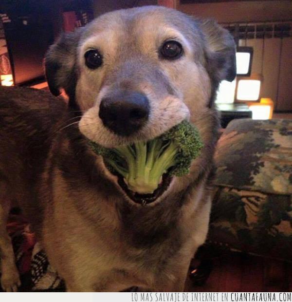 brócoli,comida,perro,sonrisa,vegetales