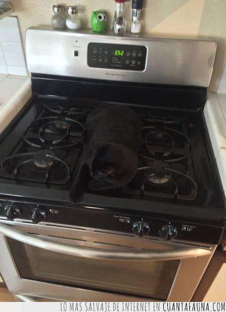 camuflaje,estufa,gato,negro,oculto