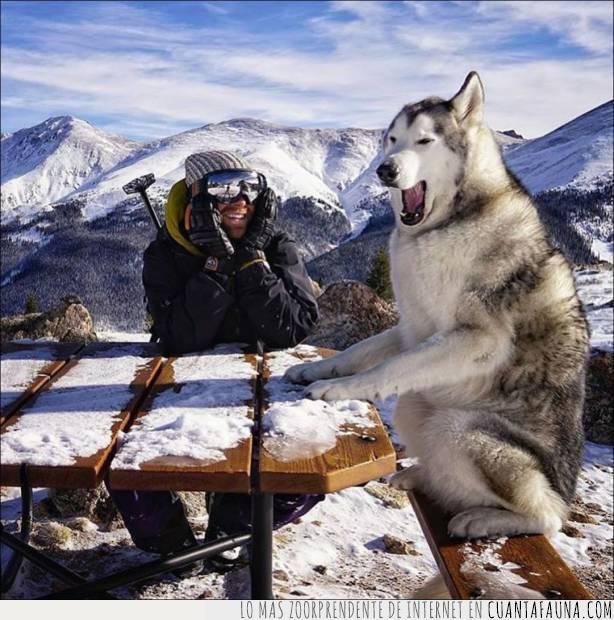 altura,broma,chiste,compañero,cumbre,montañas,perro,risa