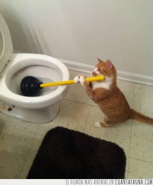 baño,gato,inodoro,plomería,problema,tapado,wc