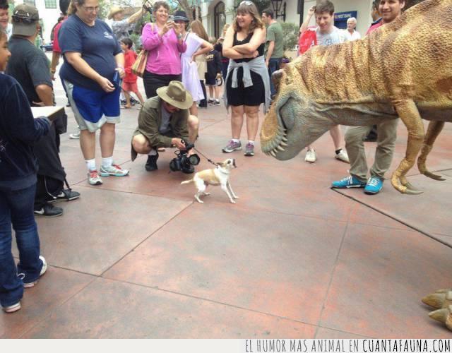 dinosaurio,enfrentar,ladrar,loco,perro,tamaño,valiente