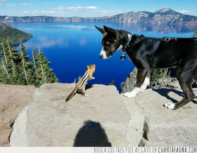 ardilla,consejo,hermoso,paisaje,perro