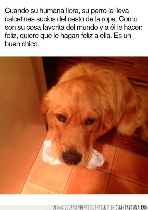amor,calcetin,dueña,humana,llevar,mascota,perro,regalo