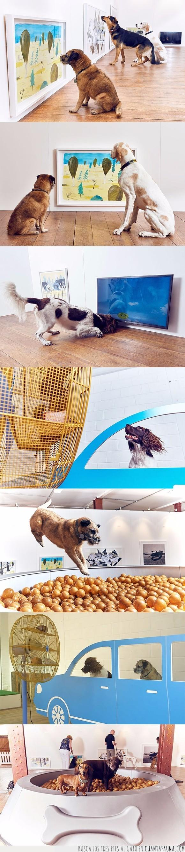 coche,diversión,Dominic Wilxon,exposición,museo,perro,ventilador