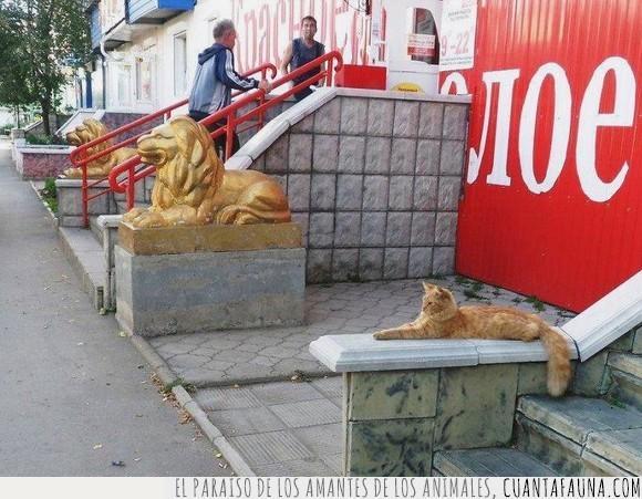 curriculum,gato,leon,mentir,mentira