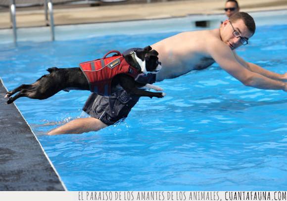 gato,nadador,nadar,natación,perro,saltar