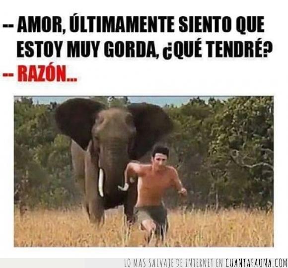 amor,elefante,gorda,novia,novio,pareja,razón,tener