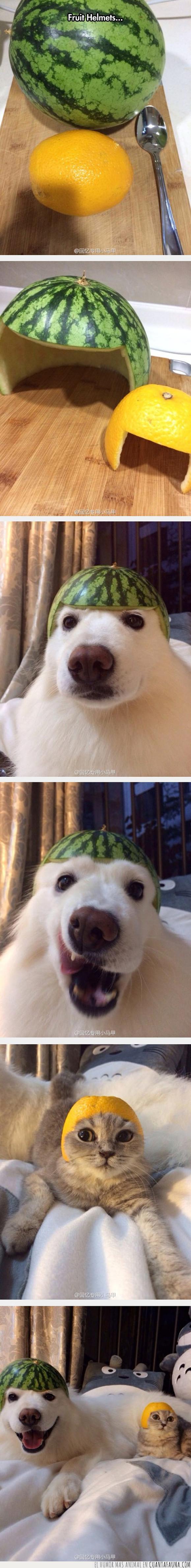 cascosa,fruta,gato,perro,sandia