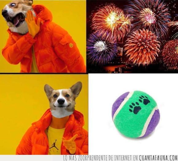 drake,fuegos artificiales,meme,pelota,perros