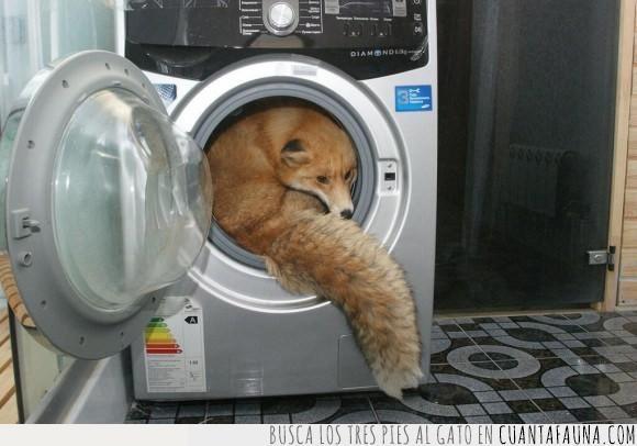 caché,firefox,lavadora,limpiar,navegador,zorro