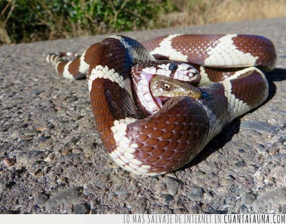 reptiles,serpientes,vívoras