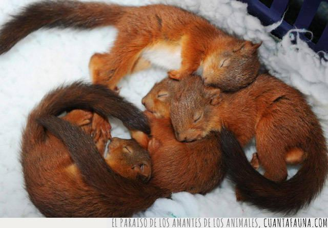 ardillas,crías,dormir,soñar