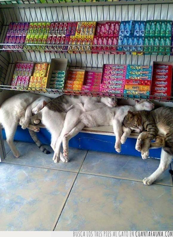 cute,gatos,gatos dormidos,lindos