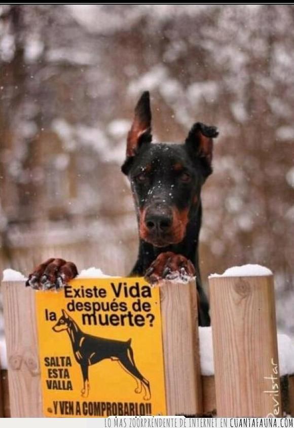 adevertencia,cartel,muerte,Perro