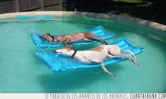 la pasan mejor que yo que debo trabajar,perro,piscina,vida