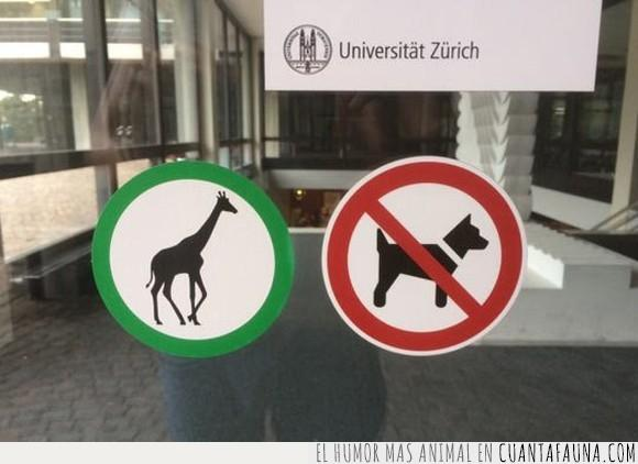 jirafa,perro,universidad,wtf,zurich