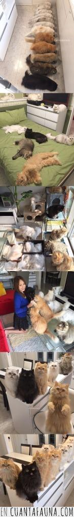 gato,loca,muchos