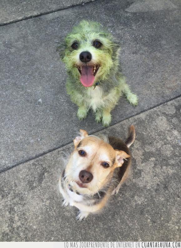 ayudar,césped,perro,verde