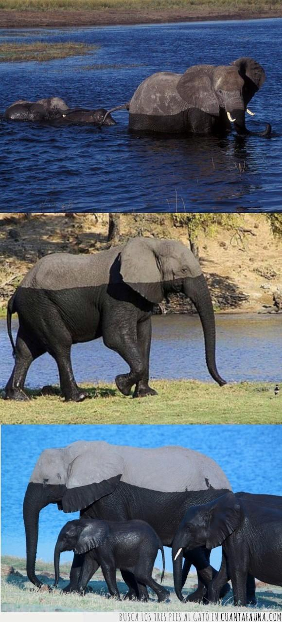 agua,elefantes,marca,nivel
