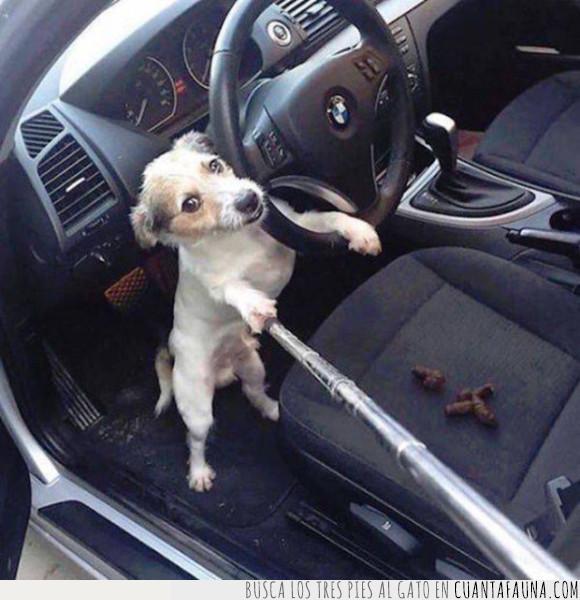 bmw,coche,perro,selfie