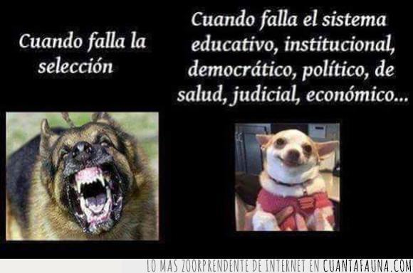 enfado,perros,seleccion,sistema educativo,sociedad