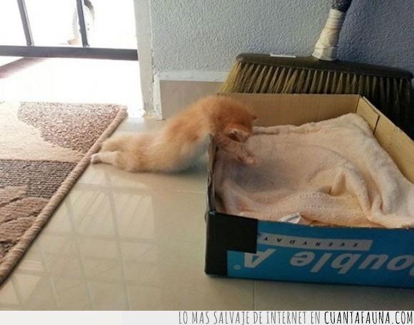 caja,dormir,gatito,sueño,ya casi