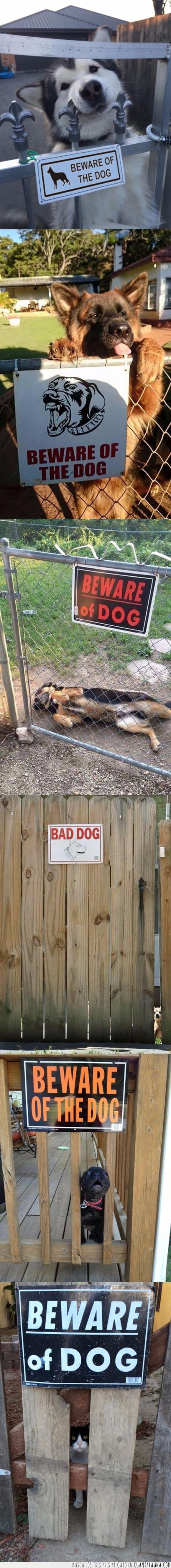 cartel,cuidado con el perro,gato,miedo,perros,valla