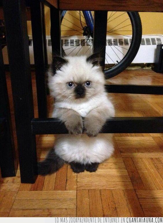 gato,interesante,no te está escuchando