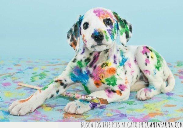 manchado,manchas,perro,pincel,pintura