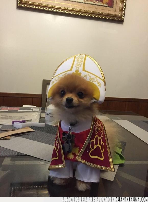 can,papa,perro