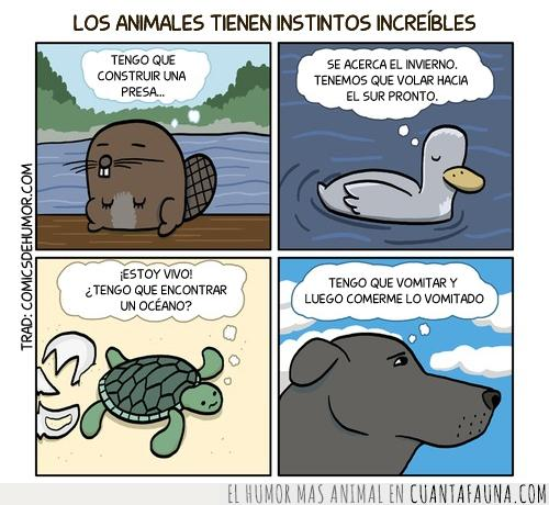 Animal,castor,instinto,pato,perro,tortuga
