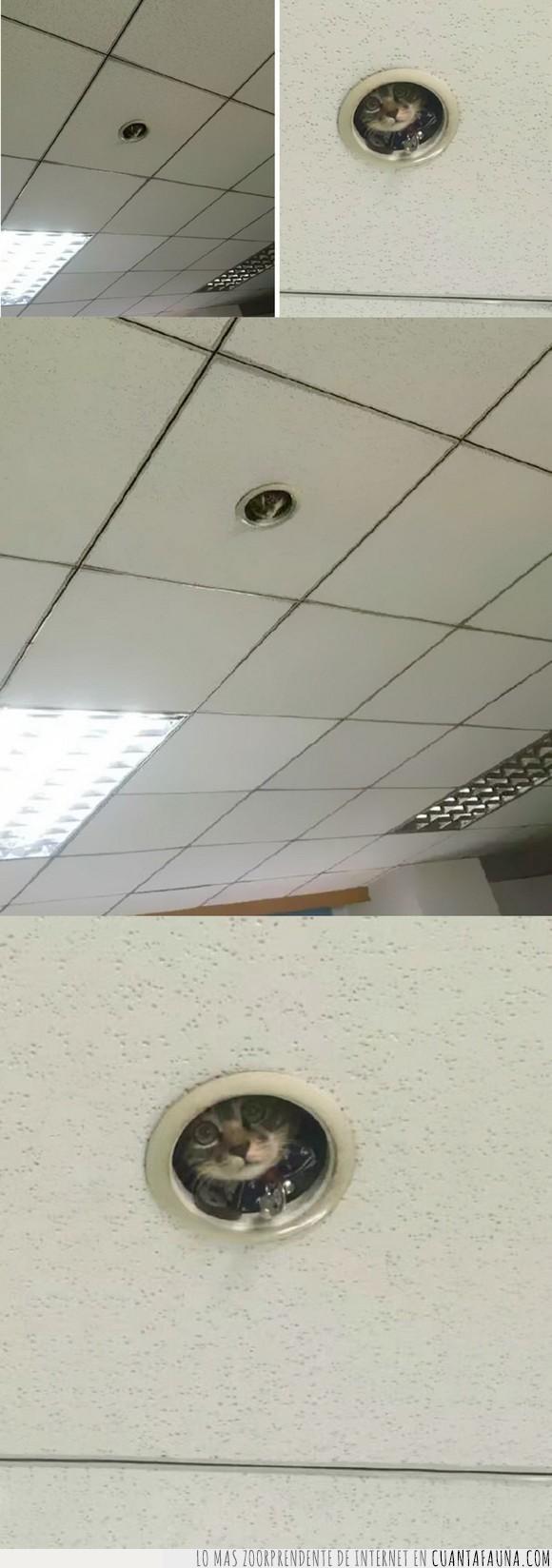 escondido,gato,oficina