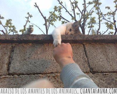 choca,cinco,gato,pata,puño