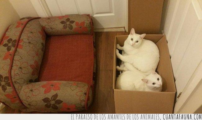 caja,comprar,decían,gato,sofá