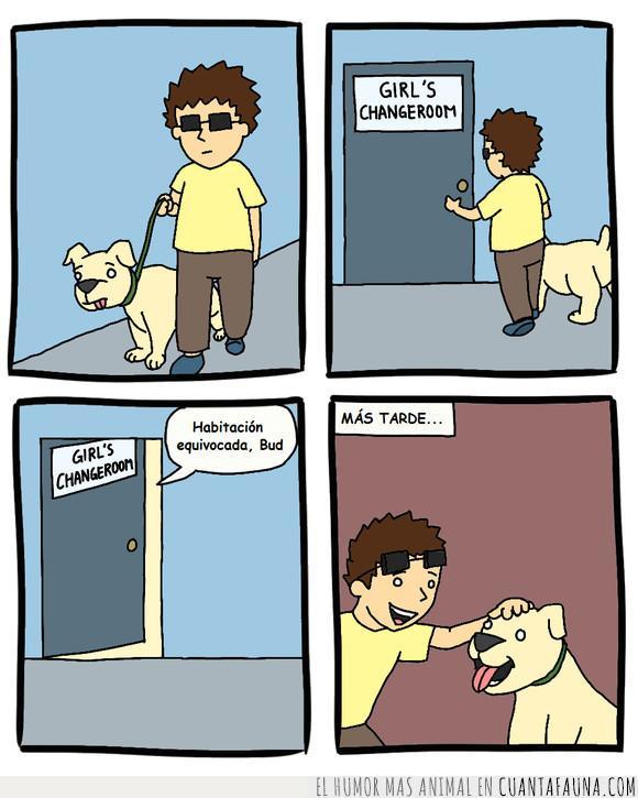 Ciego,Perro,Ver,Vestuarios