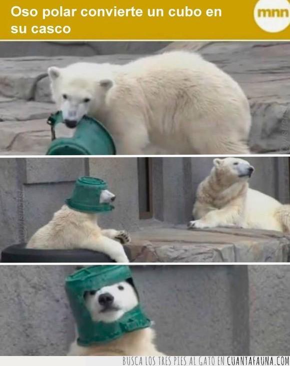 casco,cubo,oso