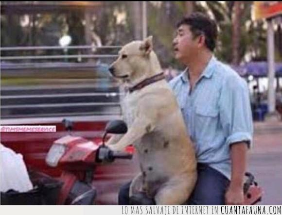 conducir,humor,moto,perro,uber