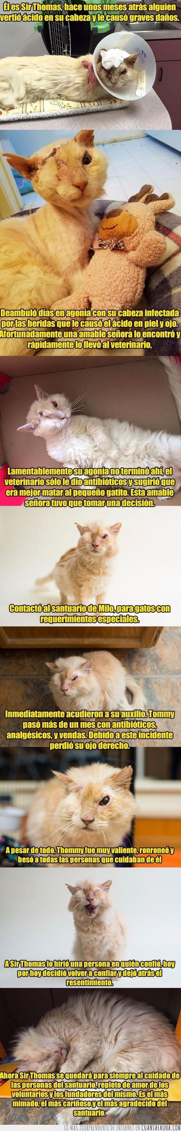 ácido,cara,gato,sir thomas